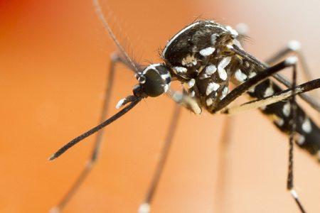 Mückenschutz Mückenvorhänge Tigermücke